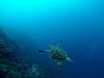 sous les eaux guadeloupe