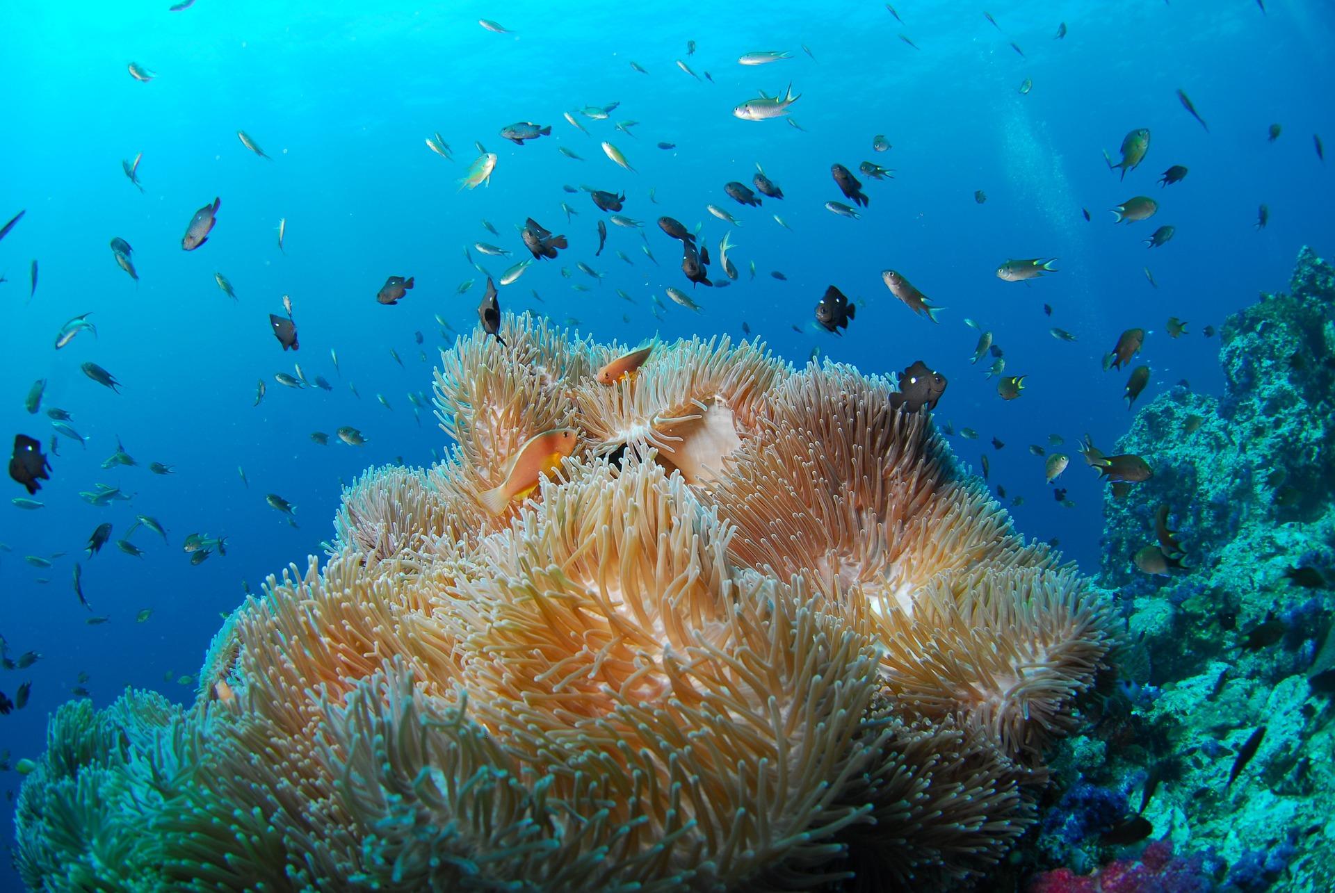 diving-689826_1920