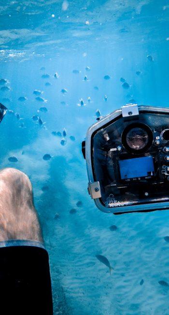 plongé sous-marine larandeau